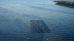 Aquakultur im Meer